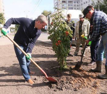 На улице Воскресенской в Архангельске посадят 130 рябин